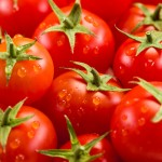 GM tomatoes fight cancer and diabetes